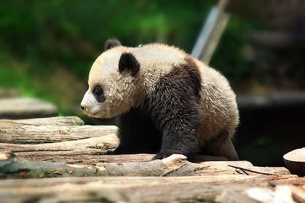 中国語会話「様子・見た目」